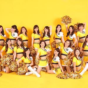 阪神タイガースオフィシャルファンサービスメンバー「Tigers Girls」の2016年度メンバー募集のサムネイル画像1