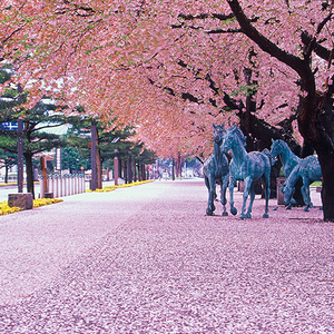 ダンサーは旅するもの:十和田市(青森)イメージ
